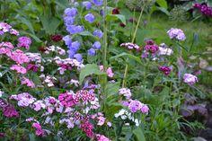 In my garden: wild flowers