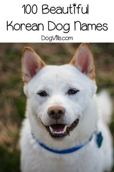Whether you're looking for Korean dog names because you love the culture or want to honor your heritage, we've got you covered! Girl Dog Names, Puppy Names, Pet Names, Miniature Dog Breeds, Dog Breeds Little, Pet Dogs, Pets, Dog Signs, Girl And Dog
