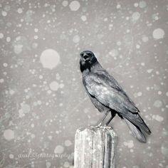 Halloween Raven Art  5x5 inch Autumn Fall by ara133photography, $13.00