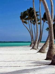A collection of tropical beach pictures - Palm Trees on White Beach