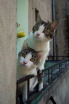 猫のバードウォッチング|Bird Watching.