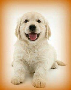 Adorable puppy!