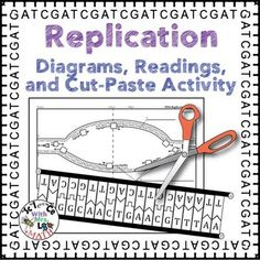 This high school biology resource contains uniquely designed diagrams for teaching about DNA replication. This process is explained carefully with diagrams, a cut and paste activity, and a reading that will greatly help student understanding.