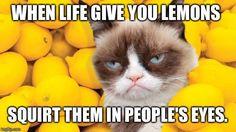 Grumpy Cat lemons