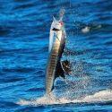Sailfish Lift Off
