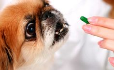 6 Super Helpful Techniques To Get Your Pup To Take His Medicine