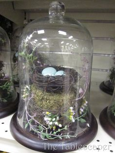 I have a thing for bird nests.
