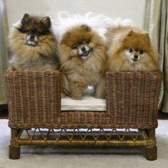 Small Anderson Dog Bed. Be still my pom-pom loving heart :).