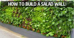 Eat Your Yard! Design an Edible Landscape