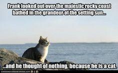 Bueno... los gatos no piensan mucho en su retiro...