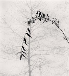 Bamboo e albero, villaggio di Qingkou nella provincia dello Yunnan, in Cina, nel 2013. - (Michael Kenna)