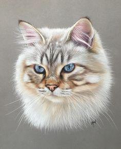 Chat des forêts norvégiennes - norvegian cat - norvegian cat pastel - pastel chat - art animalier - dessin animalier - artiste animalier - chat au pastel
