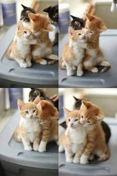 23+ Cutest Kittens And Cats You Will Ever See #cat #kitty #pets