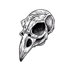 Pointillism Crow Skull