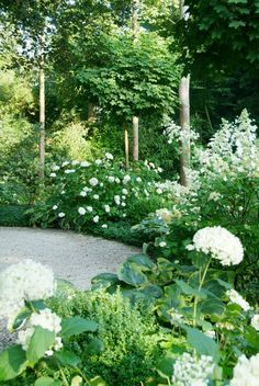 Garden design: Buro Robert Broekema- Amsterdam Layout of the garden: Van Raaijen Hoveniers - Almere Limelight Like and Annabelle hydrangeas with variegated hostas, box woods, maple, and bamboo?
