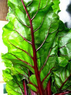 Saúde e Vida Saudável: Receita Com Folhas de Beterraba