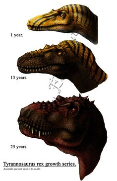 A helpful ton of dinosaur drawing references. There are too many dinosaurs to pinpoint