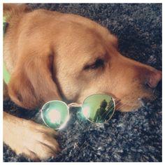 Molly chillt mit meiner Lieblingssonnenbrille #tag2