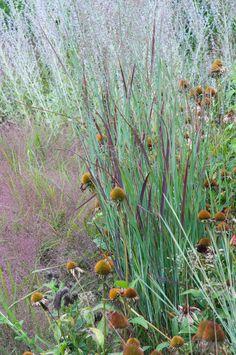 Love this photo Prairie Planting, Prairie Garden, Plant Design, Garden Design, Belle Plante, Splendour In The Grass, Natural Garden, Colorful Garden, Ornamental Grasses
