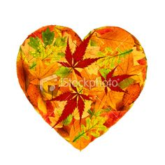 Heart shaped autumnal leaves.