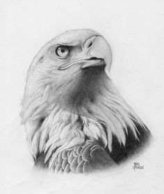 Bald Eagle (what about us) by Brad Spencer