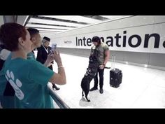 Check out this video of former US Secret Service dog Hurricane being flown to London to receive an award for his bravery. Croatia Travel, Italy Travel, Bangkok Thailand, Thailand Travel, British Airways, Service Dogs, Las Vegas Hotels, Nightlife Travel, Hawaii Travel