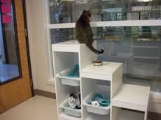 Image result for cat room