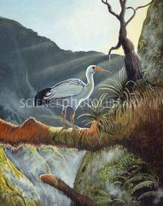 El ibis de Reunión