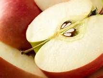 apple seed - Saferbrowser Yahoo Image Search Results