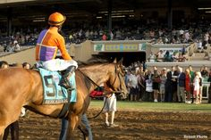 Spendthrift Farms' Beholder and jockey Gary Stevens head into the winner's circle for pictures after dusting the boys to easily win the Grade I  TVG Pacific Classic