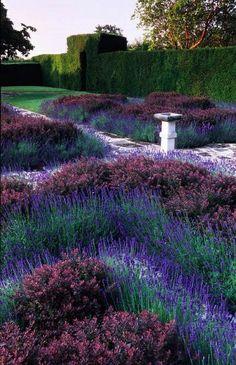 Oh, man. Talk about a gorgeous and simple knot garden. Little Hill. Sussex. Knot garden. Lavandula Hidcote. Berberis thunbergii atropurpurea Nana. yew hedge with arch. birdbath. white crazy paving path.