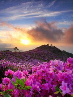 Galerie de photos: la Corée du Sud - Sunrise Over The Royal Azalea.