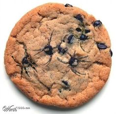 Spider Cookies (chocolate-chip cookies; use a toothpick to stretch out melty hot…
