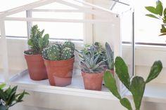 Creëer je eigen indoor garden // Tips voor een groen hoekje bij jou thuis // nu te lezen op www.cloclo.be