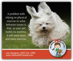 How much exercise is too much for dogs and puppies?