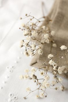 Nature in Beige Cream Aesthetic, Brown Aesthetic, Flower Aesthetic, Aesthetic Photo, Aesthetic Pictures, Aesthetic Backgrounds, Aesthetic Wallpapers, Raindrops And Roses, Foto Poster
