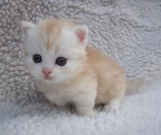Fluffy Little Kitten!