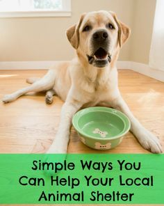Simple Ways You Can Help Your Local Animal Shelter. I love the idea of adding a small item here and there to your order. It doesn't feel like much, but then one day you have a full box to donate! Awesome idea!