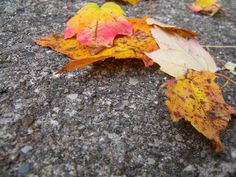 Four Leaves by Stephanie Fay