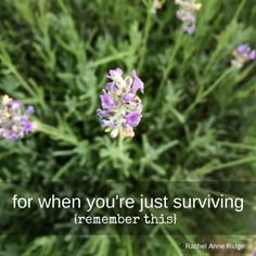for when you're just surviving