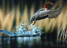 Photography Business: The Wildlife Photography   Digital Images Made ...