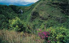 Monthly Garden Calendar for Hawaii Gardening Zones, Container Gardening, Hawaiian Gardens, Hawaiian Plants, Moving To Hawaii, Natural Pesticides, Garden Parasols, Hawaii Homes, Organic Gardening Tips