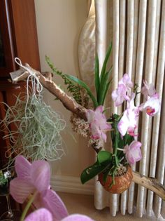 Orchid in coconut shell