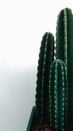 - Creative Cacti Decor - Cactus at home /Green! - Creative Cacti Decor - Cactus at home / Trendy Wallpaper, Tumblr Wallpaper, Cute Wallpapers, Wallpaper Backgrounds, Phone Backgrounds, Wallpaper Ideas, Iphone Wallpapers, Colorful Wallpaper, Wallpaper Quotes