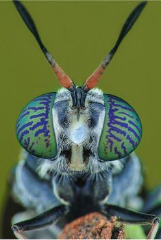 Cool Insects, Bugs And Insects, Beautiful Bugs, Amazing Nature, Insect Eyes, Symmetry Photography, Foto Macro, Types Of Bugs, Fotografia Macro