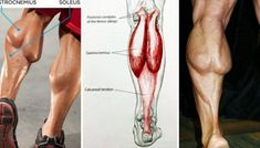 In the past, I hated calf training. Because I eliminated some mistakes in my training that were hinde. Lower Ab Workouts, Chest Workouts, Fun Workouts, Chest Workout For Mass, Best Chest Workout, Calf Training, Muscle Training, Strength Training, Calf Exercises