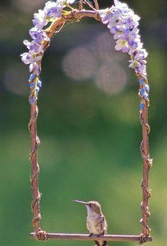 diy hummingbird perch, crafts, diy, flowers, outdoor living, pets animals