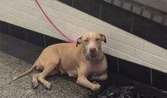 Una perra fue abandonada en la estación del tren en plena hora pico, y mientras cientos de personas la vieron, sólo una hizo la diferencia.
