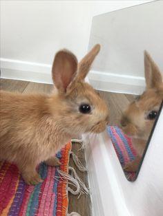 indoor Rabbit house fun