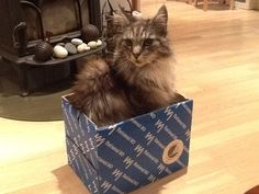 Cat in a box!